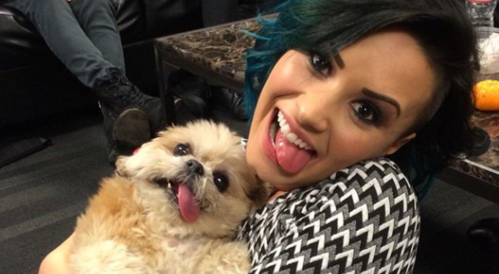 Miley Cyrus Dog Breed