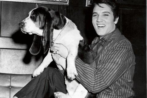 Elvis and Basset Hound