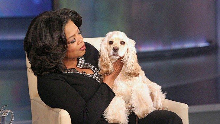 Oprah and Cocker Spaniel